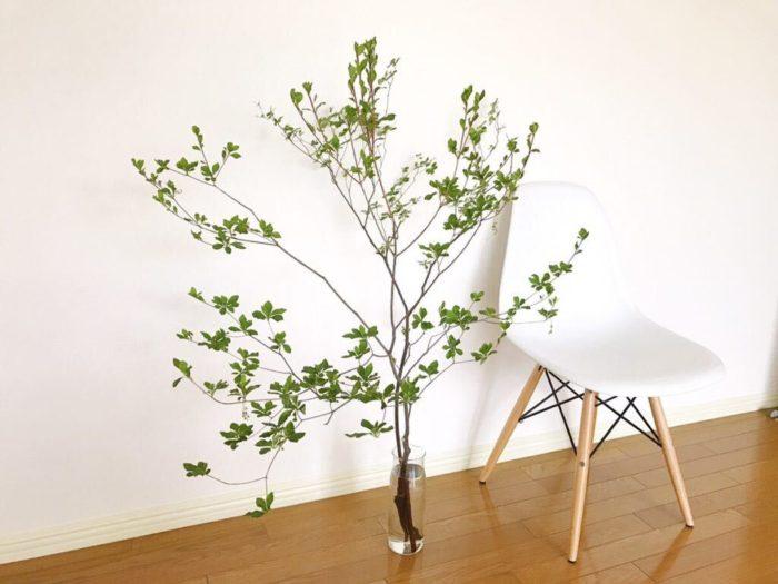 ドウダンツツジをインテリアのアクセントとして取り入れるのもおすすめです。ドウダンツツジは華奢な枝を横に広げ、その先に瑞々しいグリーンの葉を付ける枝ものです。ドウダンツツジの無駄のない枝のラインと葉の明るいグリーンは、シンプルなインテリアとよく調和します。