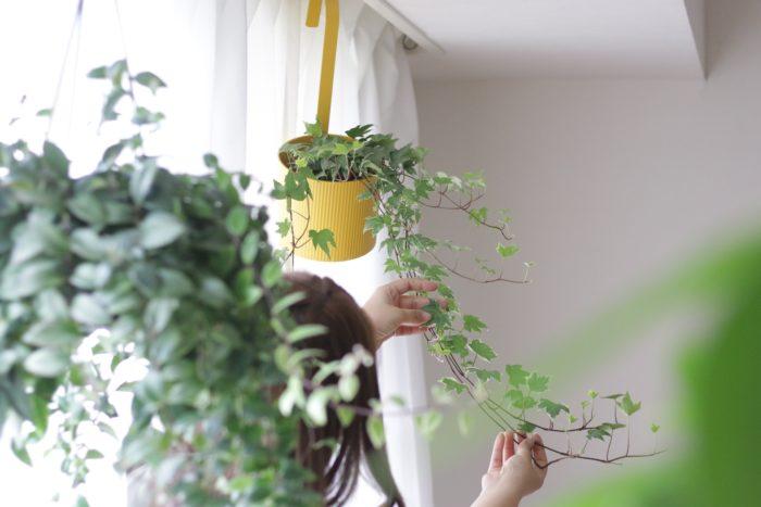 アイビーをハンギングで楽しみたいときにおすすめなのが「鉢カバーハンギングポット」。フック型になっているので、カーテンレールにもS字フックなしで気軽に吊るすことができるアイテムです。 カラーは、植物の緑がよく映える「イエロー」、お部屋の空間に馴染みやすいシンプルな「グレー」、スタイリッシュでかっこいい「グリーン」の3種類。気軽に飾れて、お部屋の雰囲気もぐっと明るくなります。