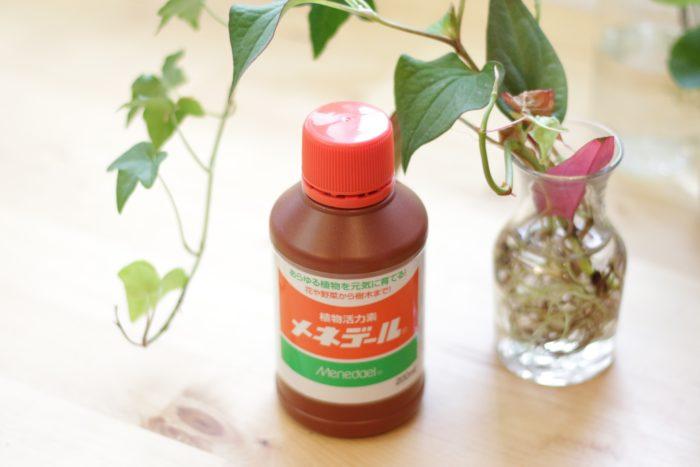 「メネデール」は植物の活力剤です。化学合成成分を一切含んでおらず安心安全。植物の発根と生長を促してくれます。