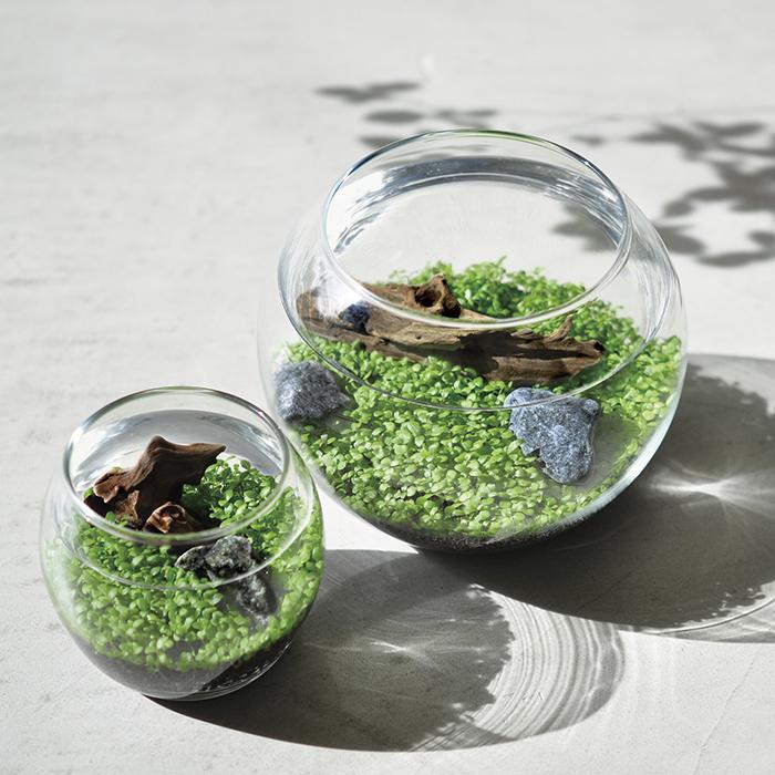 種から育てる水草 栽培セット