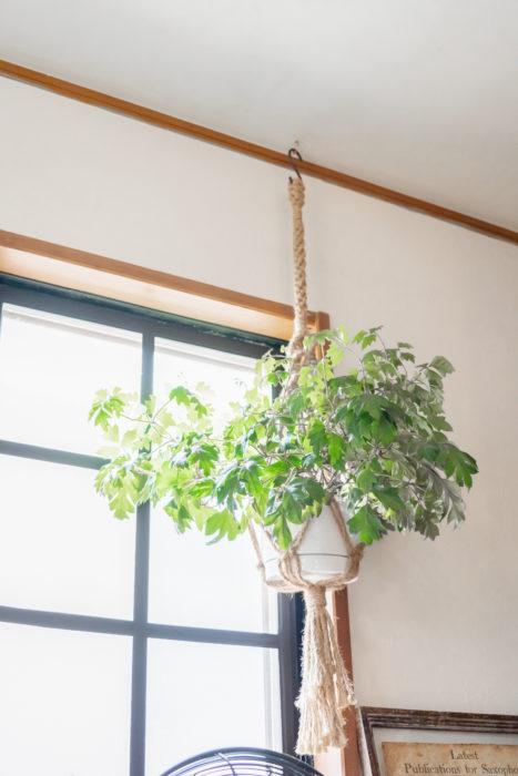 愛猫に食べられないよう、植物は出来るだけ吊るして飾るそう。高い場所に植物を吊るすことで、空間に広がりをプラスします。