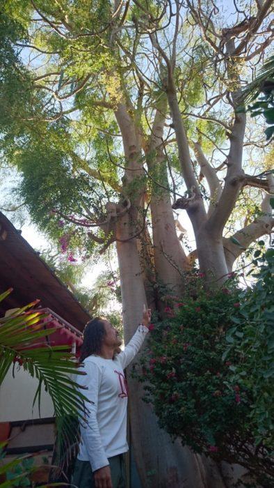 ここVICTORY HOTELにはマダガスカルならではのシンボルツリーといえるモリンガが聳え立っていた。早々にチェックインを済ませ、部屋に荷物を置いてすぐに車に乗り込み出発をした。