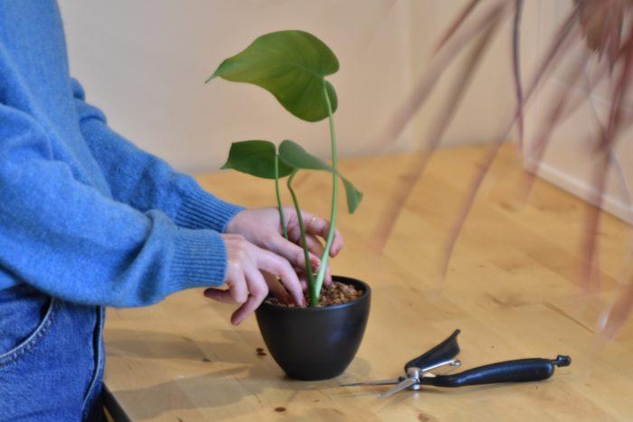柔らかな丸みのあるシンプルなプラスチック鉢「PLASTIC BLACK POT」。  鉢自体に厚みがあるうえに、光を集めやすく温まりやすいため、多肉植物や塊根植物の育成に最適。植物コレクターや生産者にも愛用者が多い理由がわかります。