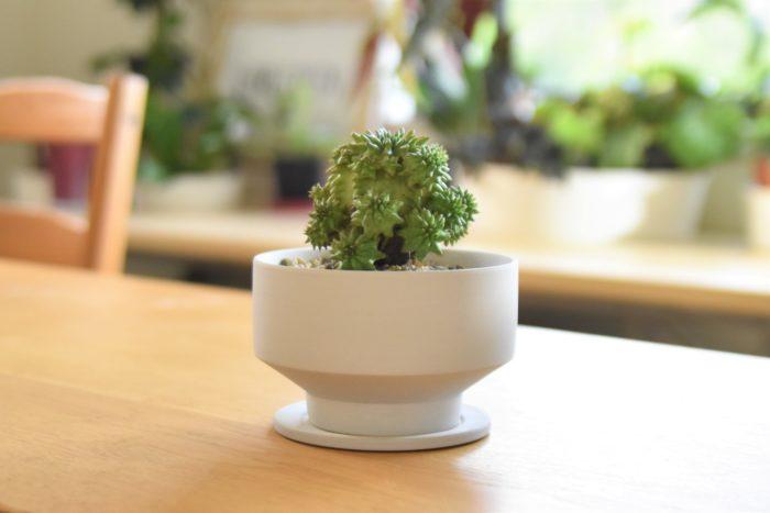 ざらっとしたマットな質感、シンプルなカラー、特徴的なフォルムで大人気の「花脊(はなせ)」の陶器鉢。ハオルチア、ユーフォルビア、サボテン……。シンプルな鉢だからこそ植えた植物を引き立て、魅力をぐっと引き出してくれます。