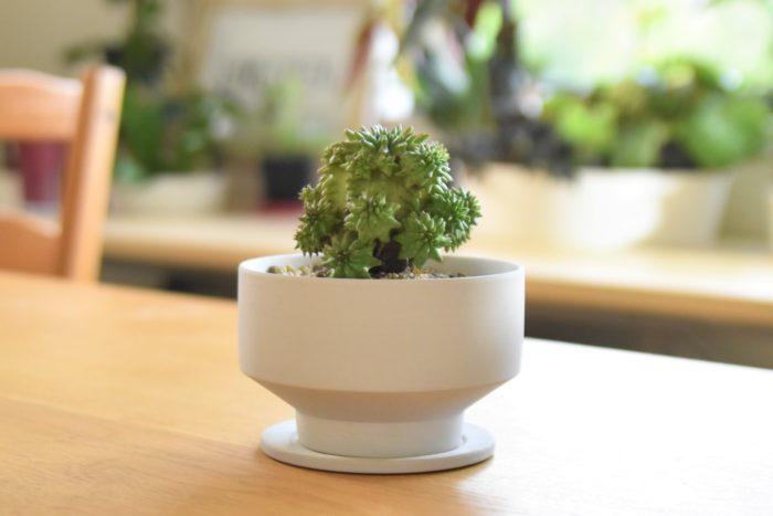 お部屋と植物に合わせて選べる「花脊 (はなせ)の植木鉢」。シンプルなフォルムとカラーで、目を惹くようなフォルムの多肉植物やサボテンなどを引き立ててくれます。
