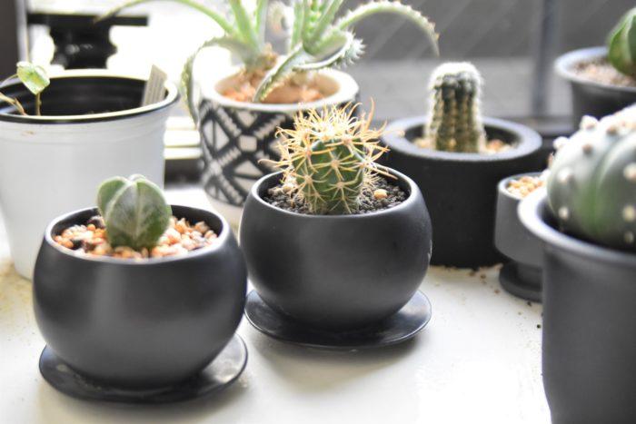 鉢表面につやがある小さな陶器鉢「マリナ」。丸みのある可愛らしいフォルムですが、サボテンや多肉植物などを植えるとメンズライクにバランスよく決まるシンプルな鉢です。ホワイトとブラックの2色から選べます。