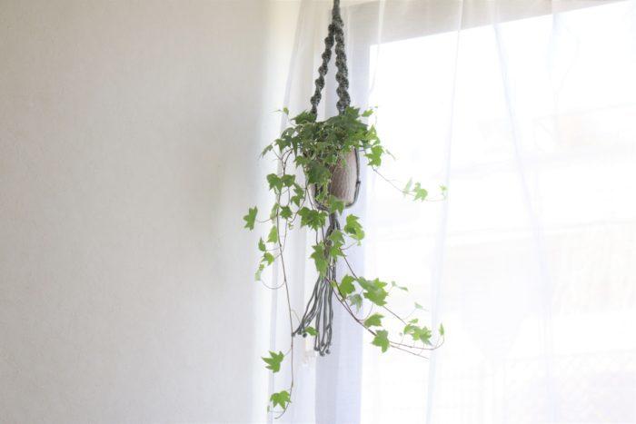 シンプルなお部屋も魅力的だけれど、そこに一つでもグリーンを加えるとお部屋の印象がぐっと変わるものです。 LOVEGREEN STOREで販売中の吊るして楽しめる植物には、お部屋のインテリアになるマクラメハンギングがセットで付いてきます。
