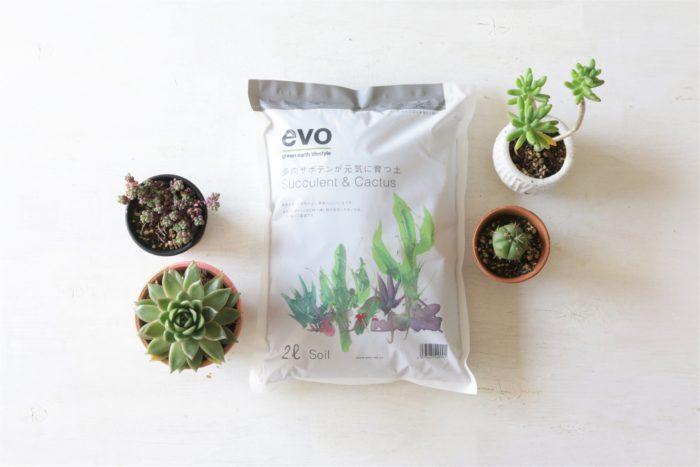 多肉植物やサボテンに適している水はけのいい土。evoの「多肉サボテンが元気に育つ土」排水性と通気性がよく根腐れしにくい土です。