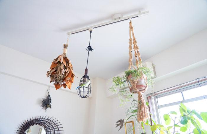 植物に合わせて日当たり・風通しが共に良いハンギングを採用。「ポイントとしては高さを変えて吊るすこと。浮遊感が強調できておすすめです」。
