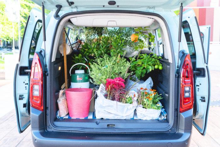 実は今回の展示で使った植物や道具は、すべて一度にベルランゴに積んで運びました。高さのあるオリーブや果樹などの大型植物や、クワやシャベルといった膨大な荷物が、広大なラゲッジスペースやたくさんの収納スペースのおかげで、無理なくすっぽり車内に。改めてその収納力の高さと、植物との相性を実感できました!