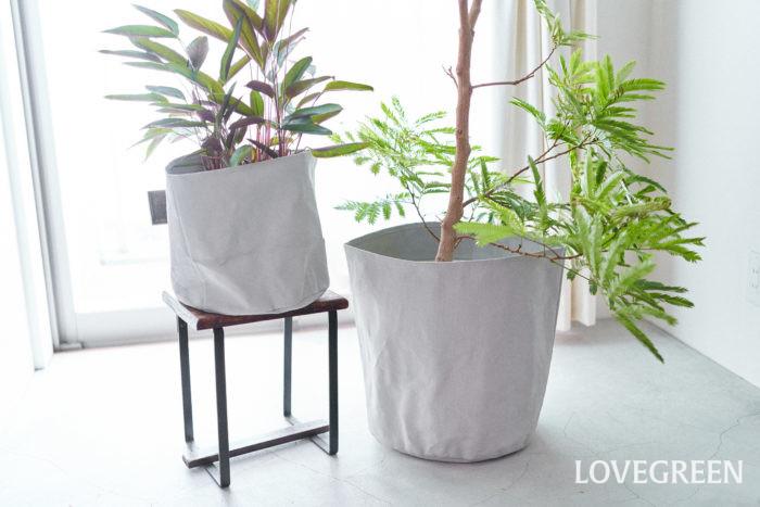 鉢カバーは、気分に合わせて鉢をコーディネートできるアイテム。カバーをかけるだけで鉢と植物の表情の違いを楽しめます。 気分転換や模様替えに。いつもとちょっぴり違うお部屋の雰囲気が味わえておすすめ。カラーは落ち着きあるシックなグレー。これからの季節に取り入れていきたいアイテムです。おうちにある観葉植物の鉢の高さに合わせて、ふちを折って使うこともできます。 エバーフレッシュ、フィカス・ウンベラータのような明るいグリーンの観葉植物との組み合わせがよくマッチしますよ
