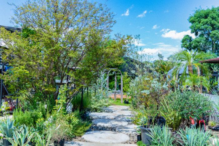 モデルガーデンも兼ねた敷地内には、庭木や観葉植物なども売られていて、庭好き・植物好きにはたまらないスポット!