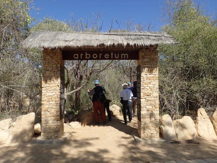 まずは「arboretum d'antsokay」、植物園のようなものである。ここには約900種の植物が管理されている。その90%がマダガスカル固有種であり、80%がメディカルプランツとのこと。つまりここを観ればマダガスカルの代表的な植物が殆んど観ることができてしまうということになる。