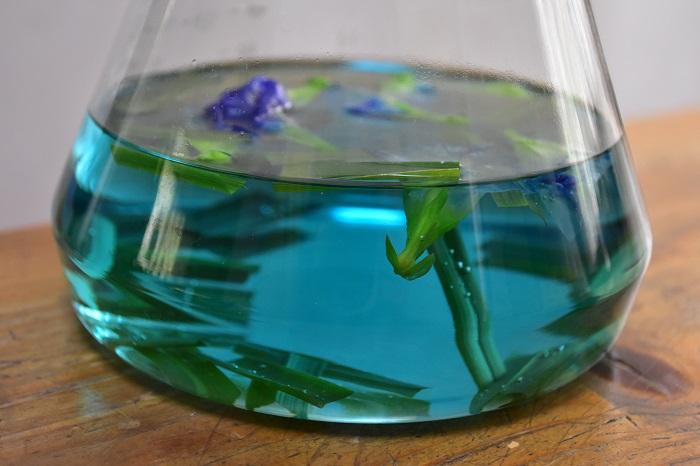 バタフライピーの花を入れたら熱湯を注ぎます。ポットを揺らしたりせず、自然に青い色が出てくるまで2~3分待ちましょう。自然の色とは思えないような……とてもきれいな青い色がじわじわと出てきます。