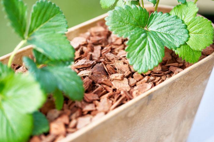 evoのバークチップには、土中の微生物を活性化させる「腐植」成分がたっぷり入っているため、植物の生長を助ける心強い味方になります。  ガーデニングを始め、室内で育てる観葉植物の植木鉢など、土の表面を覆って見栄えをよくしてくれます。