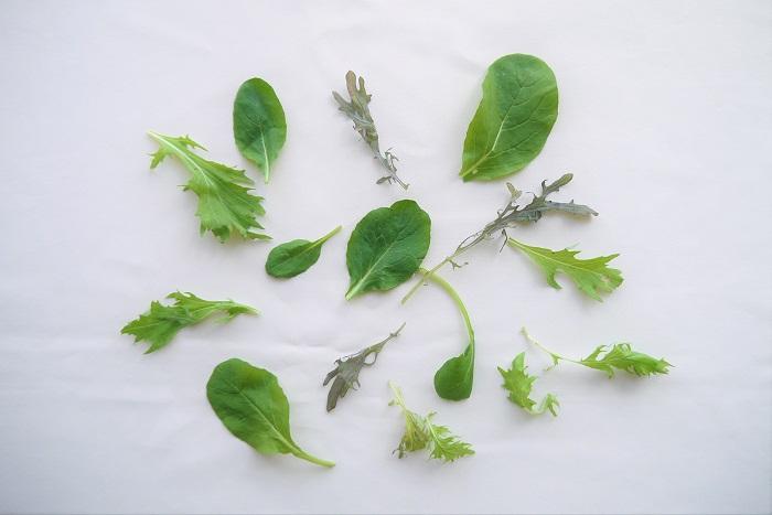 """ベビーリーフに含まれている主な野菜の種類を紹介します。  レタス類 サニーレタスやフリルレタスなど、レタスの仲間は必ずと言っていいほど入っています。まだ若いレタスの葉は柔らかく甘みもあり、シャリシャリとした食感を楽しめます。  <div class=""""posttype-library shortcode""""><div id=""""postMain"""" class=""""full""""><article class=""""library-list-tax""""><a href=""""https://lovegreen.net/library/vegetables/p89062/"""" class=""""clickable""""></a>    <div class=""""library-list-ttl clearfix"""">    <h2 class=""""library-list-ttl-text""""><span class=""""library-list-ttl-text-inner"""">レタス</span></h2>     <div class=""""library-list-types"""">     <a href=""""/library/type/vegetables"""" class=""""library-list-type"""">野菜</a>    </div>  </div>   <div class=""""thumbnail"""" style=""""background:url(https://lovegreen.net/wp-content/uploads/2017/04/82c5f0dfdcc7eef95fc66c3f50edcf12-300x225.jpg) no-repeat center/cover;""""></div>   <div class=""""top-post-ttl-extext"""">           <ul class=""""library-list-list"""">           <li class=""""library-list-item"""">鮮やかな緑や薄い緑いろの大きな葉がいくつも重なり、結球を作っている玉レタスは、アブラナ科の代表のキャベツのような形をしていますが、じつはキク科の野菜です。 先端が赤っぽくフリルになっているサニーレタス、長い茎を食すアスパラガスレタスとも呼ばれるステムレタス、結球が緩くしんなりした食感のサラダ菜、アジア圏で食べられているサンチュ、楕円で緩い結球のコスレタスなど、種類が豊富で味もそれぞれの特徴があります。 レタスの花は、キク科のアキノノゲシに似た淡い黄い色の花を咲かせます。 レタスは、日本語で「チシャ」といいます。これは、レタスを切ると白い乳のような液が染み出てくることから「乳草(ちちくさ)」と呼ばれ、そこから「ちさ」、「チシャ」へと変化しました。 レタスは、古代エジプト時代にはすでに食られていたようです。日本へは中国から伝来しましたが、当時は「掻きちしゃ」が主流でした。現在のレタスの主流である玉レタスは、第二次世界大戦後アメリカから伝わってきました。 レタスの種子は、光に当たらないと発芽しないという「好光性種子」の性質を持っているため、種をまくときは土を被せすぎないように注意します。 高温条件や日が長くなるなどの長日条件により、レタスは花芽が形成されてとう立ちします。 </li>       </ul>       </div> </article></div></div>  ルッコラ ゴマのような香りが特徴のルッコラ。ルッコラはまだ若い葉でも立派にルッコラの香りを楽しめます。ルッコラのベビーリーフは柔らかく、噛むとほんのりルッコラの味がします。  <div class=""""posttype-library shortcode""""><div id=""""postMain"""" class=""""full""""><article class=""""library-list-tax""""><a href=""""https://lovegreen.net/library/vegetables/p89059/"""" class=""""clickable""""></a>    <div class=""""library-list-ttl clearfix"""">    <h2 class=""""library-list-ttl-text""""><span class=""""library-list-ttl-text-inner"""">ルッコラ</span></h2>     <div class=""""library-list-types"""">     <a href=""""/library/type/vegetables"""" class=""""library-list-type"""">野菜</a>    </div>  </div>   <"""
