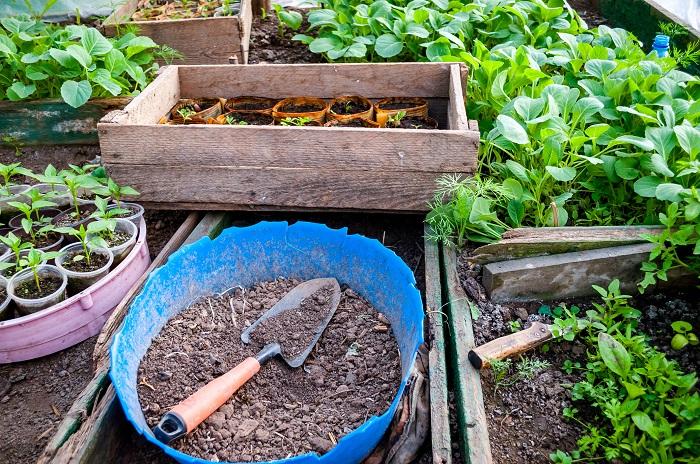 プランターで野菜を育てる基本中の基本は土の準備。プランターならその野菜ごとに適した用土を準備できます。  土づくりというと少しハードルが高いように聞こえますが、市販の野菜用培養土を使えば簡単です。少し慣れてきたら、それぞれの野菜の育て方を確認して腐葉土を足したり、苦土石灰を混ぜたりすると、それぞれの野菜に適した土になります。
