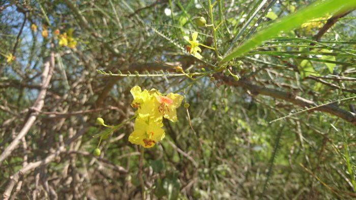 大きなものやとげとげしい植物を見続けてきたので可愛らしさを感じる。