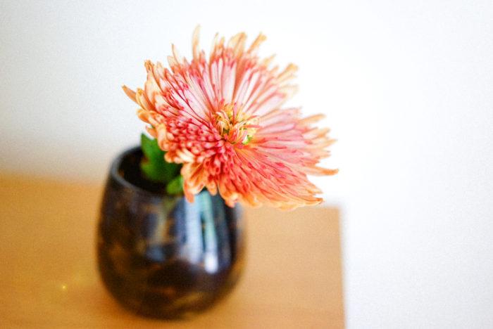 秋は菊の季節。ブロンズカラーのアナスタシアは、秋らしい色合いで一輪で飾っても本当に綺麗です。「菊は仏様に供えるイメージがあり、そんなに馴染みがない」という方も多いと思いますが、花屋になってからは優美でバリエーションも豊かな菊の世界に魅了されるようになりました。特に長く持つので、はじめて飾る方にも、本当にオススメのお花です。
