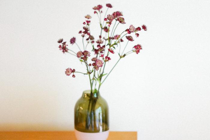 セリ科のお花、アストランティアは、さりげない佇まいがなんとも可愛いお花です。