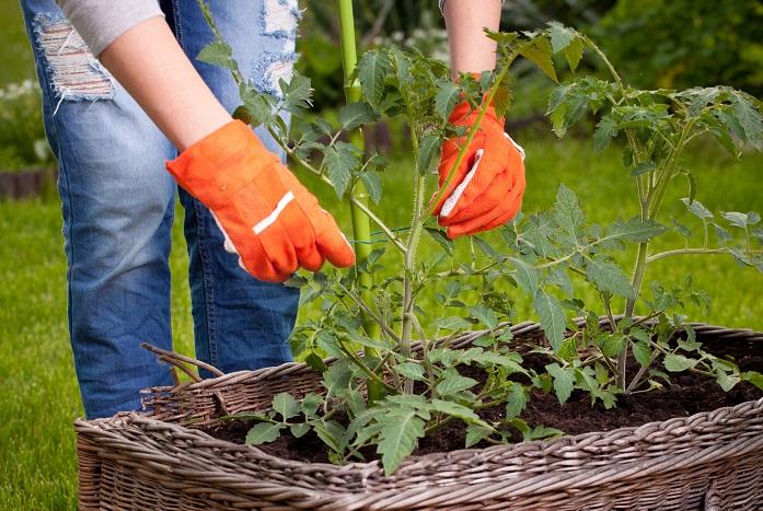 家庭菜園を始めるに当たって、最低限必要なものです。他は必要になった時に足していけば大丈夫です。