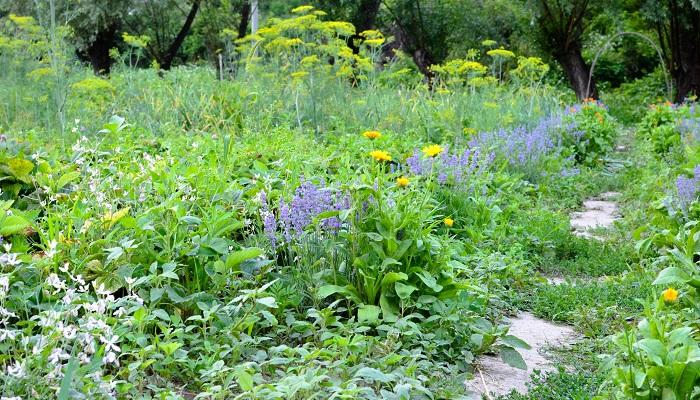 家庭菜園は自宅で野菜を育てること、と説明しました。規模の大小は関係ありません。お家で野菜を育てたら、家庭菜園です。  家庭菜園をもう少し発展させて、果樹や野菜、ハーブと一緒に花木や観賞用の園芸植物も育てる、観賞と収穫を同時に楽しめるのがポタジェガーデンです。ポタジェガーデンも家庭菜園の一つです。