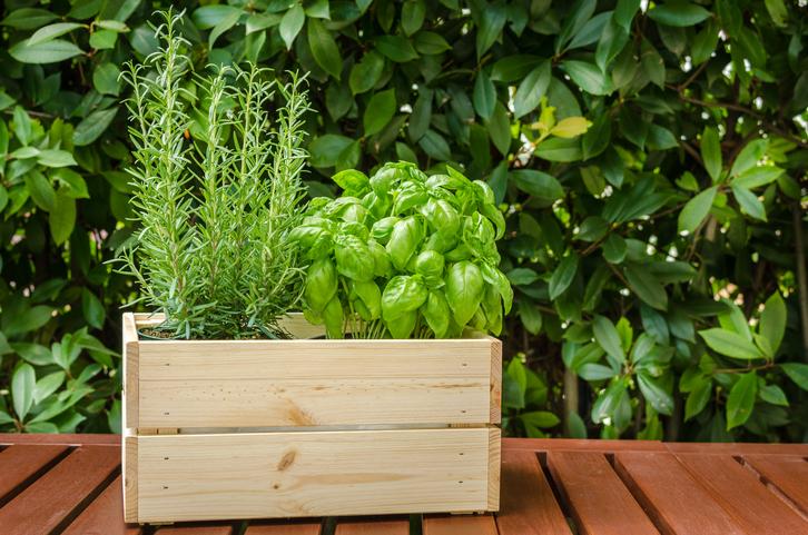 お庭がないから…なんて言わずにベランダで家庭菜園を楽しみましょう。プランター一つあればすぐに始められます。  プランターで育てるベランダ菜園にはメリットがたくさんあります。例えば、市販の野菜用培養土を使えばよいので、土作りの心配もいりません。お部屋から眺めて楽しめる上に、収穫が終わった後の片付けも楽です。