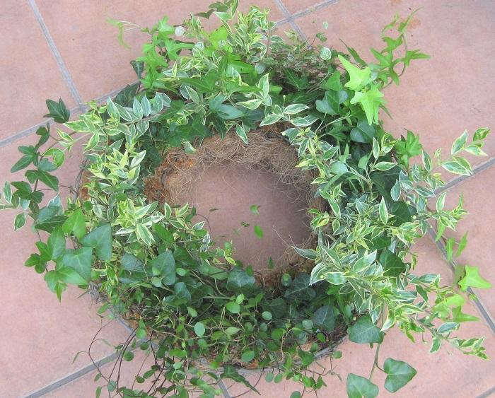 写真のように、アイビーやワイヤープランツなどの常緑の植物だけを集めてグリーンリースをつくつこともできます。寒さや暑さに強いグリーンだけでつくっているのでオールシーズン葉の美しさを楽しめることが魅力です。
