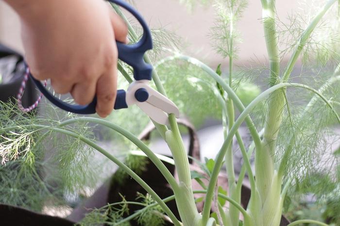 植え付け、植え替えに使用するスコップと、剪定、収穫に使用するハサミは、野菜だけでなく園芸全般の必須アイテムです。長く使えるものを選んでおきましょう。時間と共に道具が手に馴染んでいき、手にした瞬間に阿吽の呼吸が生まれるような何とも言えない心地よさを味わえます。