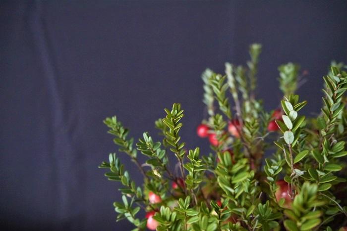 クランベリーの実の特徴 クランベリーの実は、ツルコケモモで直径6~10mm程度、オオミノツルコケモモは直径は10~20mm程度になります。9月頃から色づき始め、10月には真赤になります。真っ赤に熟したクランベリーの果実はとても可愛らしく、いつまででも眺めていられるくらいです。  クランベリーの収穫時期 クランベリーの収穫時期は9月~10月です。真赤に熟した果実を収穫します。但し、クランベリーは本来寒冷な湿地を好む植物です。観賞用に栽培することは可能ですが、暖地ではきれいに赤く熟さないこともあるようです。