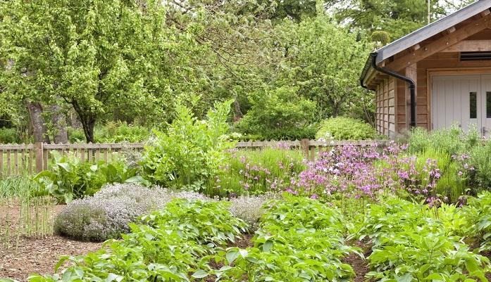 家庭菜園とは、家庭は家の内部、菜園は野菜を育てる一区画、つまり自宅の敷地内に野菜を育てるスペースを作ること、または実際に育てることを意味します。  家庭菜園を始めるに当たって、様式にとらわれる必要は何もありません。1株でも野菜を育ていれば立派な家庭菜園です。初心者さんでも気軽に始められます。