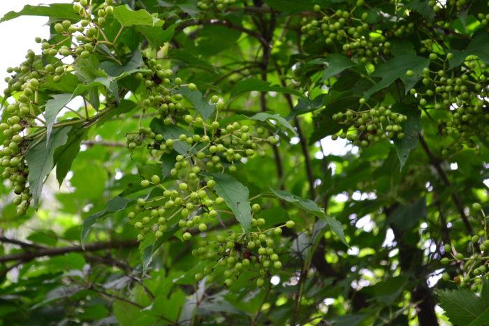 低木の種類とそれぞれの特徴やメリットを紹介