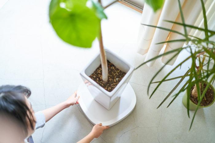 大きな観葉植物の移動は意外と大変…。陶器など固い素材の鉢だと、床を傷つけてしまう可能性もあります。そんな時このようなキャスター付きのトレーを1つ持っておくと、とっても捗ります!
