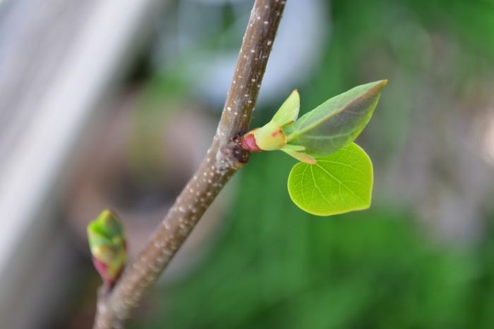 春分の日は「自然をたたえ、生物をいつくしむ」です。具体的に何をしたらいいのかわかりません。  春分の日は、春のお彼岸に当たります。せっかくですからお墓参りに行き、先祖の霊に感謝をしましょう。また春分の日は春の始まりのような日です。啓蟄を過ぎ、目を覚まして動き出した生き物をいつくしみ、芽吹き始めた植物を愛で、春を満喫する日として過ごすのが幸せなのではないでしょうか。