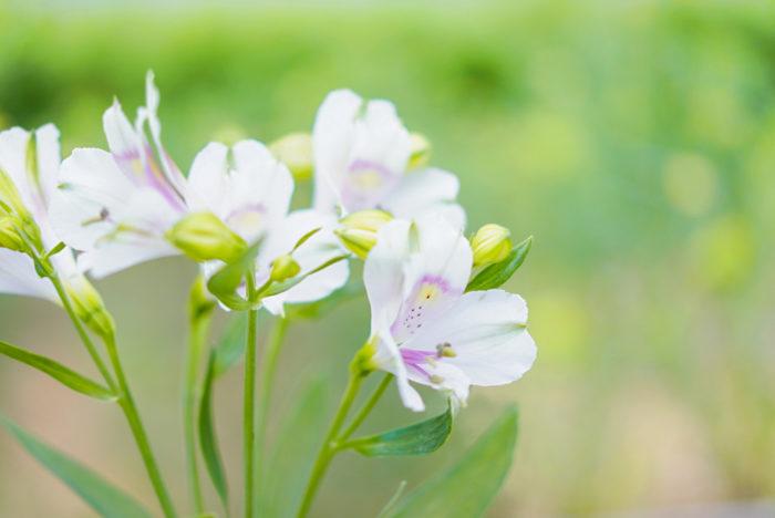 モグラなどの野生動物の被害にあうこともあり、天候も含めて本当に色々なことがある中で、トライアンドエラーを続けた中で、選ばれたお花達だと学びました。いつも、新しい花作りに挑戦している片桐さんのポジティブなマインドに刺激をうけ、花を育てる面白さも難しさも知ることができました。