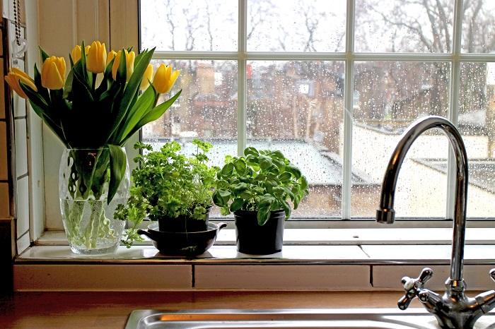 水回りはコバエが大好きな場所です。キッチン、バスルーム、トイレなどの排水溝は水垢や油汚れが溜まりやすい場所です。こまめに掃除を行うようにしてください。