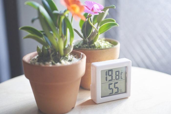 温度「ランの好む環境に合わせて管理する」 多くの洋ランは熱帯生まれ。そのため寒さには敏感。最低温度は10℃以上の環境で多くのランは育てられます。種類によっては高温を好んだり、寒さに耐えたりします。種類ごとの好む環境を知ることは大事なポイントです。