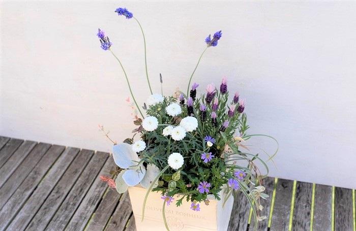 白いポンポン咲きのマーガレットに、紫のレースラベンダー、フレンチラベンダー、ブラキカムを合わせた寄せ植えです。アクセントとして、セネシオ、ハツユキカズラ、ミスキャンタスなどの白っぽいリーフを使っています。さらに、白い器を合わせることで清潔感のある爽やかで上品なイメージの寄せ植えになっています。