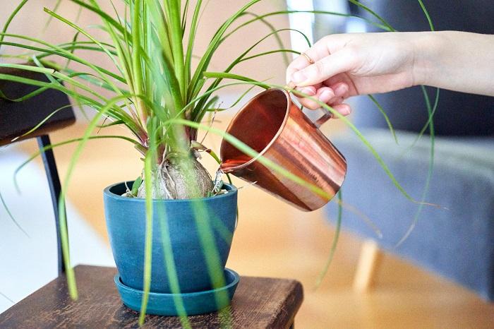 コバエは、観葉植物の鉢植えに使用している有機質の用土に寄ってくることもあります。鉢の上の方だけを無機質の用土に変えるだけでも効果があります。  鉢皿に溜まった水もコバエの発生源になりやすいので、水が溜まったらこまめに捨てる、鉢皿も洗うなど、常に清潔に保つように心がけましょう。
