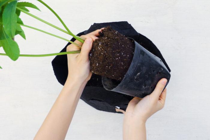 プラスチックポットから取り出すときは、底の方をきゅっとつまみながらだとスムーズにできます。