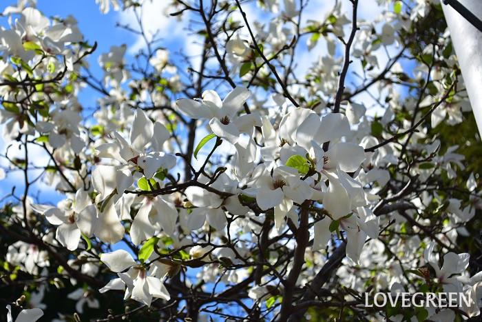 春分の日は毎年変わります。春分の日の決め方は、国立天文台が定めた日付を前年の2月1日に政府が発表します。  太陽の通り道である黄道と、地球の赤道を延長した線が交わる2ヶ所の点を、それぞれ春分点、秋分点といいます。春分点、秋分点の上を太陽が通過する瞬間を、春分、秋分と呼びます。この春分が含まれる日が春分の日とされます。