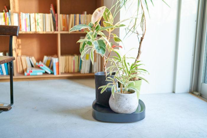 中サイズの観葉植物もまとめて乗せておけば1つ1つ運ぶ必要はありません。