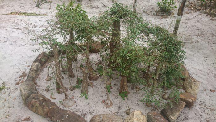 また近くには希少な植物の有名な収集家もいて、色々な情報を共有してもらえる。実際にこの時も、案内していただきユニークな植物を拝見した。