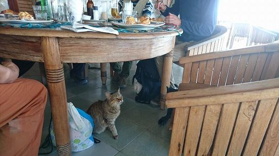 さらにランチの時には、足元にネコちゃんが遊びに来てくれて、ネコ好きの又右衛門の今までの疲れは、いっぺんに吹き飛んでいった。