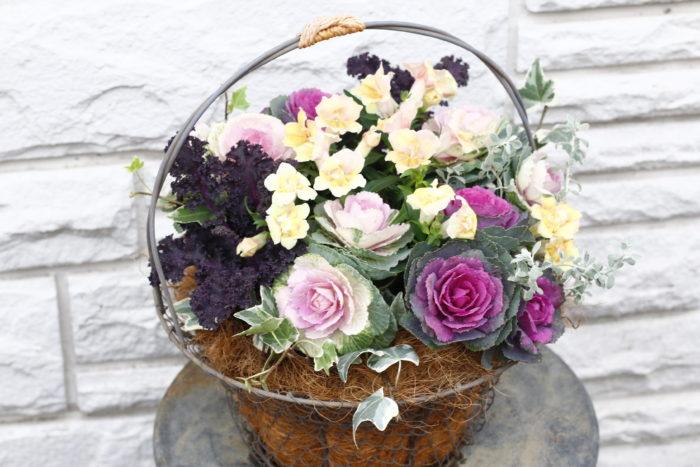 正月飾りでおなじみのハボタンは耐寒性のある宿根草。新品種が次々に作り出され、従来のイメージを覆すような品種も多種類あります。ミニや高性なども加わってバラエティーが広がり、洋風な寄せ植えにもよく合います。春になると菜の花のような花を楽しむことができます。