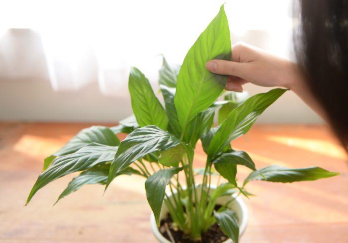 これは植物ラバー永遠の課題ですね……! 虫を0にすることは正直難しいというのが本音ですが、少なくすることは可能です。  冬の室内植物の虫対策の合言葉は「予防が肝心! 出たらすぐ処理!」。以下ポイントを記載しておきますので、一緒に虫対策を頑張りましょう!  外に置いといた植物を室内に取り込む前に、葉裏や枝の間をチェックし、虫を見つけ次第捕殺すること。 室内植物の土は赤玉土や鹿沼土ベースの、有機物が入っていない土を選ぶこと。 冬の室内植物は、風通しよく、日当たりが良い場所で管理すること(日中ずっと締め切ってしまう方は、サーキュレーター使用がおすすめ!)。 冬の室内植物は、葉が乾燥して病気になりやすかったり、カイガラムシがつきやすくなることも。。。こまめな葉水をすること(葉裏も忘れずに!)。  葉裏や土の表面に害虫がいないか定期的にチェック。虫を発見したときは、薬剤を使って早めの対処! コバエには専用の対策グッズもありますので、それで対策も◎