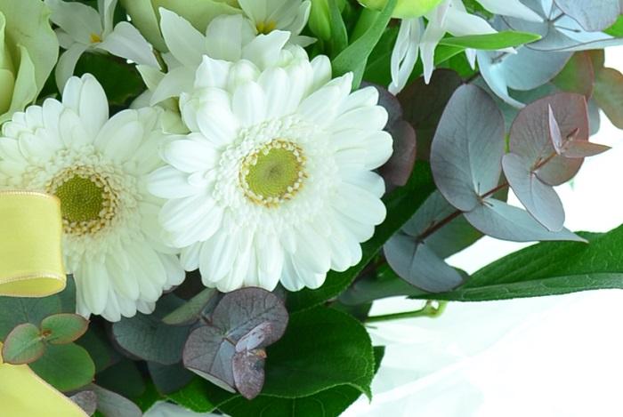 大きく花びらを広げたガーベラは可愛らしくもあり、優しい雰囲気も持ち合わせた花です。ガーベラは淡いクリーム色や淡いピンクなど、淡色系のバリエーションも豊富です。