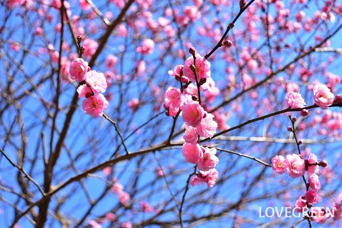 七十二侯|立春