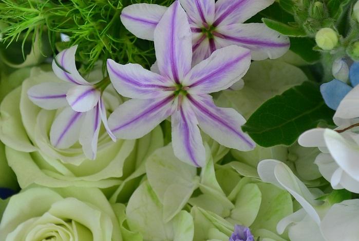 亡くなってすぐに行われる葬儀では白を基調に淡い紫やピンクなど、優しい色の花が使用されます。  供花に使用する花も、派手な色は避けて、白をメインにした優しい色で統一するようにしましょう。供花は最後に棺の中に入れられる場合が多いので、周りの花との調和を考えて、斎場指定の花屋さんにお願いするのもよいのではないでしょうか。