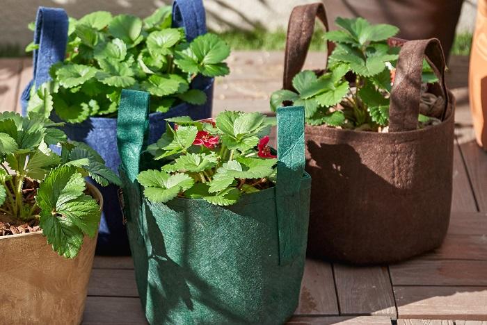 イチゴのプランター栽培|基本の育て方